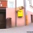 Awesome Parkour Dog