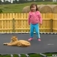 Cat vs Baby on Trampoline