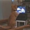 Hilarious Cat Watching Box
