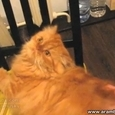 Hilarious Cat Back Scratching Reaction