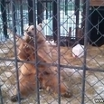 Funny Kung Fu Bear