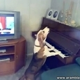 Talented Dog Playing The Piano