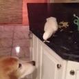 Parrot Feeding Its Friend