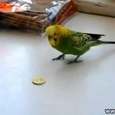 Parrot Plays With Money