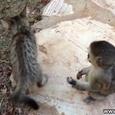 Funny Monkey vs Cat
