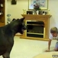 Giant Dog Playing With a Boy