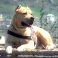 Unbelievable Parkour Dog