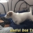 Useful Dog Tricks 3