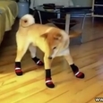 Dogs VS Boots