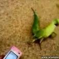 Raving Bird