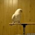 Parrot Dances to Dubstep