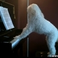 Dog Got Talent