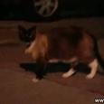 Klepto Kitty