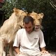 Lions Love Him