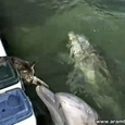 Cat and Dolphin Friendship