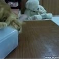 Cat Demands to Open The Jar for Him