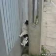Smart Climbing Dog