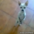 Cute Dancing Dog