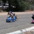 Dog vs Girl Car Race