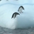 Penguins Playing on Iceberg