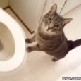 Kitty Is Fascinated By Flushing Toilet