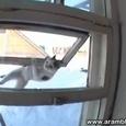 Amazing Ninja Cat