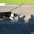 Dog Attacks Evil Shadow Hand