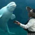 Mariachi Band Serenading a Beluga Whale