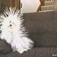 Funny Static Dog