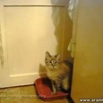 Cute Hiding Cat