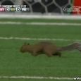 Funny Squirrel Invades Soccer Field