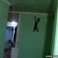 Funny Cat-Spider