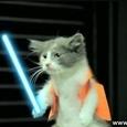 Outstanding Jedi Kittens