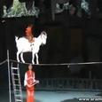 Fantastic Chinese Circus