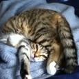 Funny Pretzel Kitt