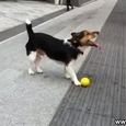 Dog likes to play