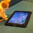 Kitten Plays With Virtual Fish