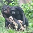 Funny Synchronous Monkeys