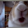 Cute Rabbit Eats Banana