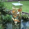 Great Garden Aquarium
