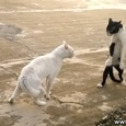 Funny Cobra Style Cats Fight