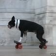 Awesome Skateboarding Dog in Paris