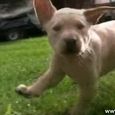 Cute Puppies at Slow Motion