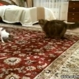 Tiny Dog Trolls a Cat