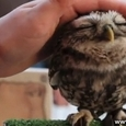 Cute Lovely Owls