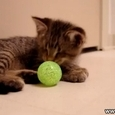 Cute Blind Kitten Plays With Ball