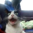 First Cats Car Trip