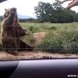 Incredibly Cute Bear Saying Goodbye