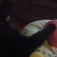 Awesome Cat Gets Baby to Sleep
