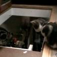 Hilarious Cat Fail